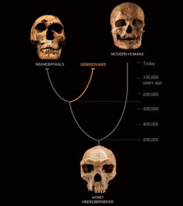 denisovan-family-tree