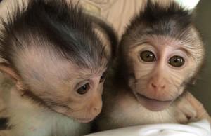autistic.monkeysx519