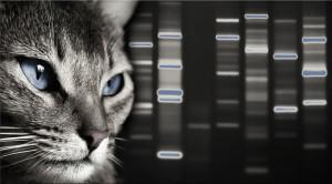 Cat-DNA